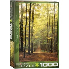 Eurographics 1000 - Forest Road